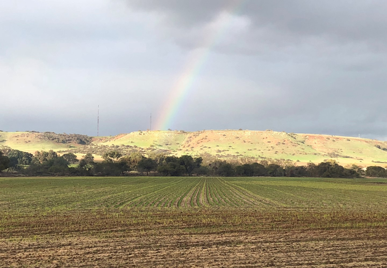 Rainbow-over-Wavecrest